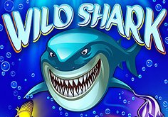 Wild Shark Pokie Logo