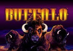 Buffalo Pokie Logo