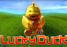Lucky Duck Pokie Logo