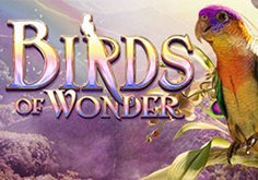Birds Of Wonder Pokie Logo